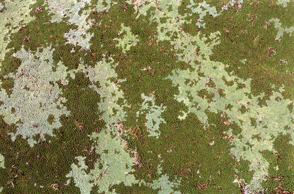patterns in a spongy bed of moss Bed Botany Carpet Green Growing Growth Growth Moss Nature Soft Sponge Spongy  Spread Springly! Tasmania Texture