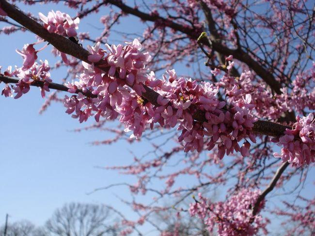 No Filter Spring Flowers Blossom Branch