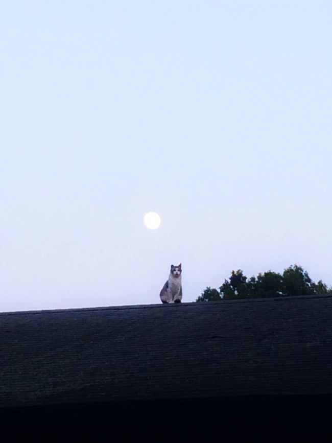And the Cat jumped Over the Moon ....