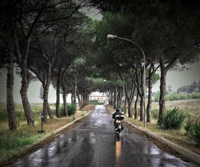 Composition Day Empty Italy Leading Motorcycle Outdoors Perspective Rain Road Rome Street The Way Forward Tranquility Transportation Tree Tree Trunk Vanishing Point