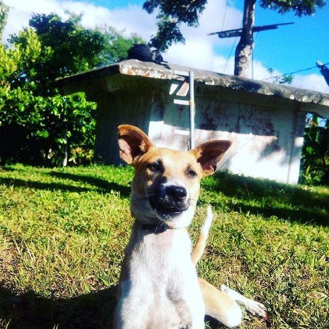 Meet Cho the pup! 🐶 Dogs Guardog Puppy