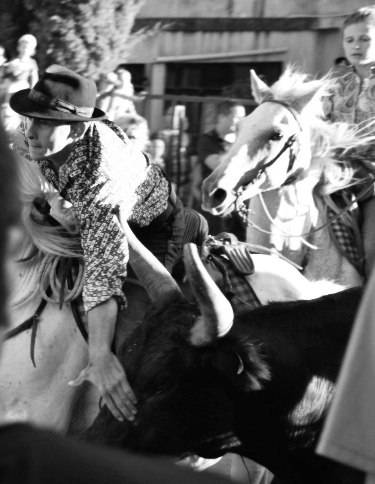 Shades Of Grey Streetphotography Monochrome Blackandwhite Gardian Toros Horses Camargue Bandido