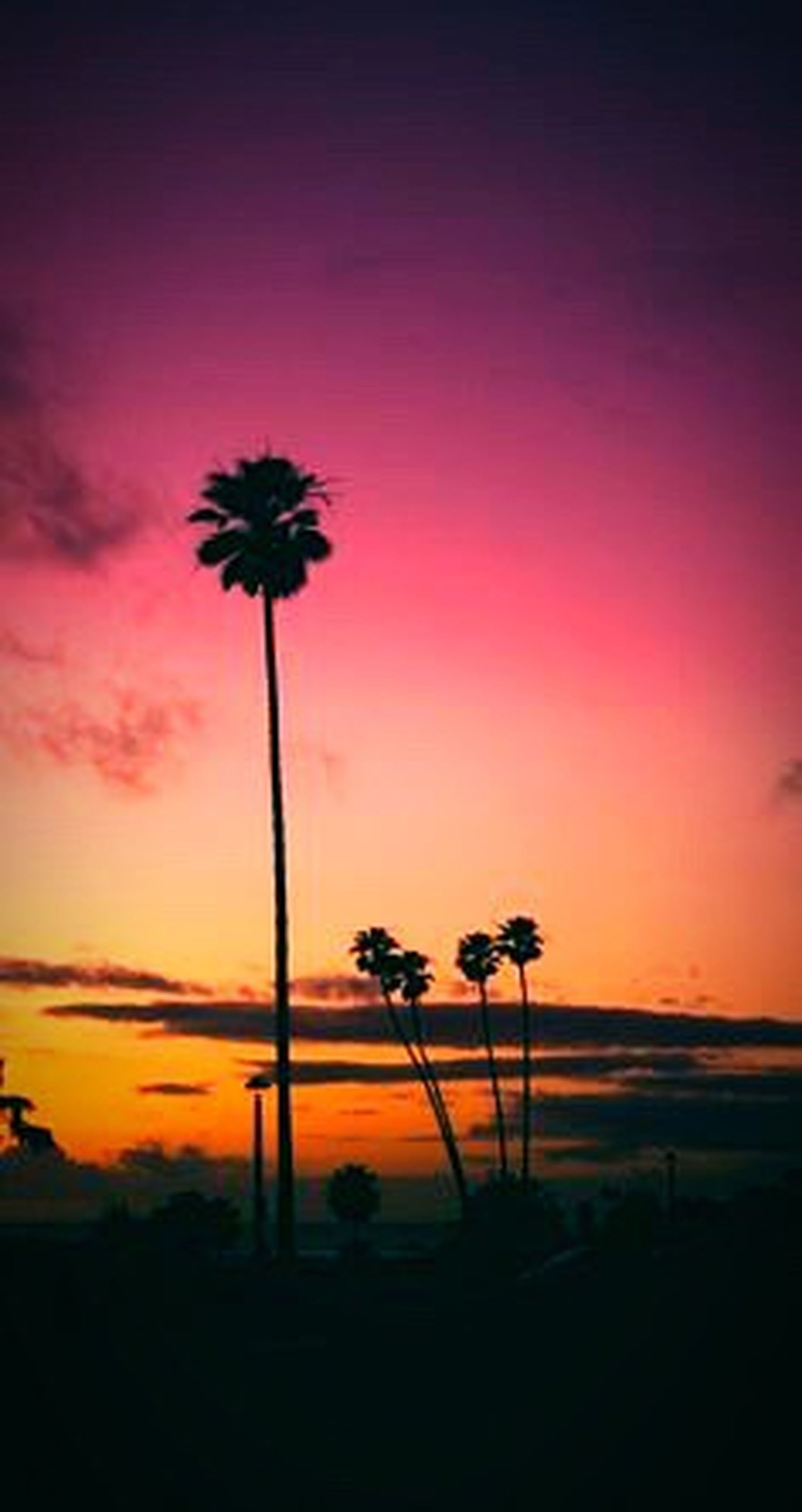 sunset, silhouette, palm tree, beauty in nature, tranquil scene, scenics, tranquility, solitude, nature, idyllic, growth, tree trunk, stem, dark, sky, dusk, calm, orange color, moody sky, outline, dramatic sky, plant, tall - high, outdoors, flower, cloud, sun, remote, romantic sky, tall, no people, majestic, atmospheric mood, pink color