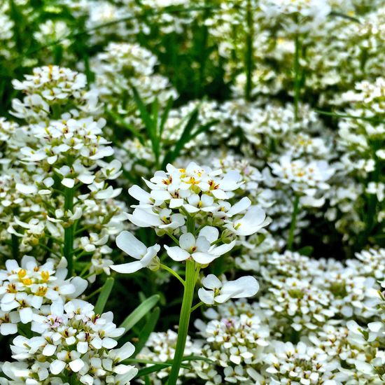 Flower Nature Secret Garden Iphone 6 Plus Explore Your Outdoors