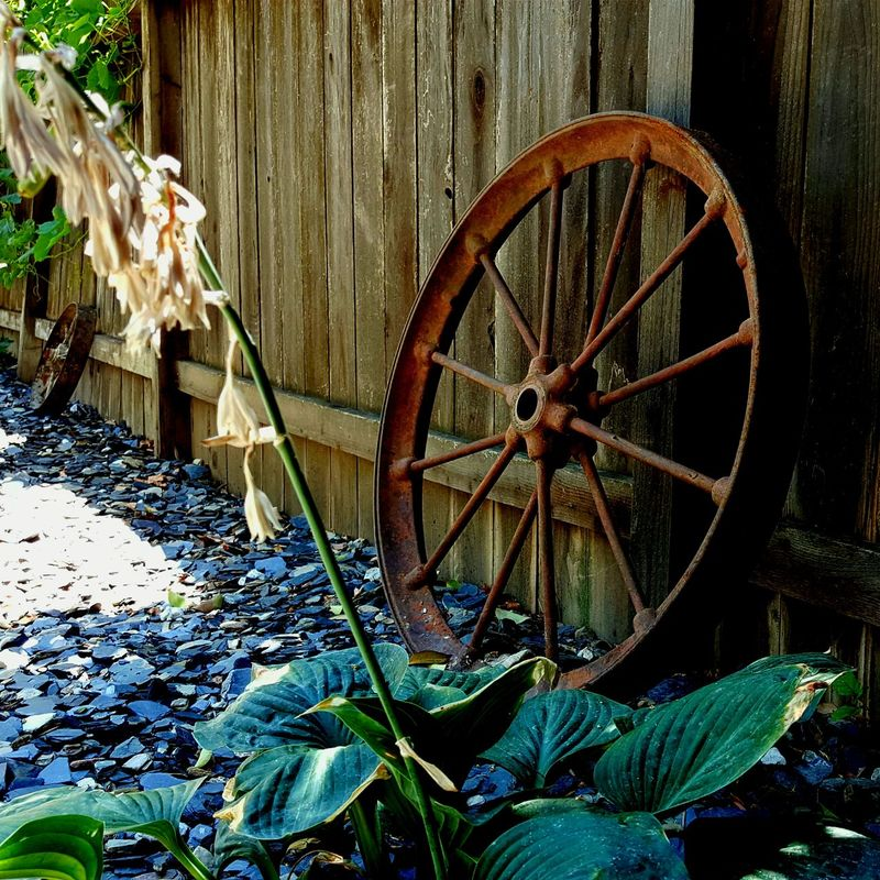 Old Fence Rusted Wheel Rustedmetal Two Wheels Slate Rock Wood Metal Rock White Flowers