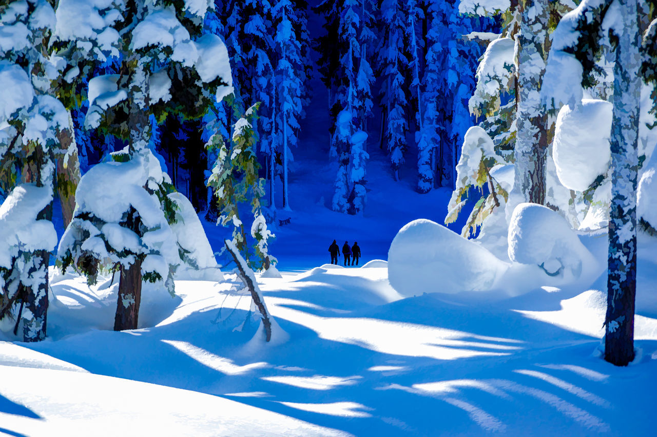 Deep in the Shadows Beauty In Nature Cold Temperature Day Frozen Landscape Nature Outdoors Paradise Meadows Snow Strathcona Provincial Park Tranquility Tree Winter