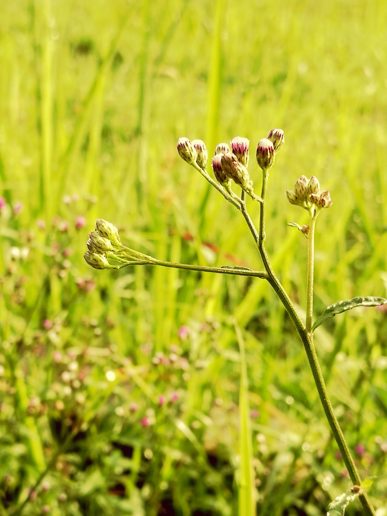 Grass flower. Grass Grass Area Grass Flowers Flower Photography Grassfield Grass Photography Flower Collection Flowerlovers Nature Photography Garden Flowers Naturelovers Flowers,Plants & Garden