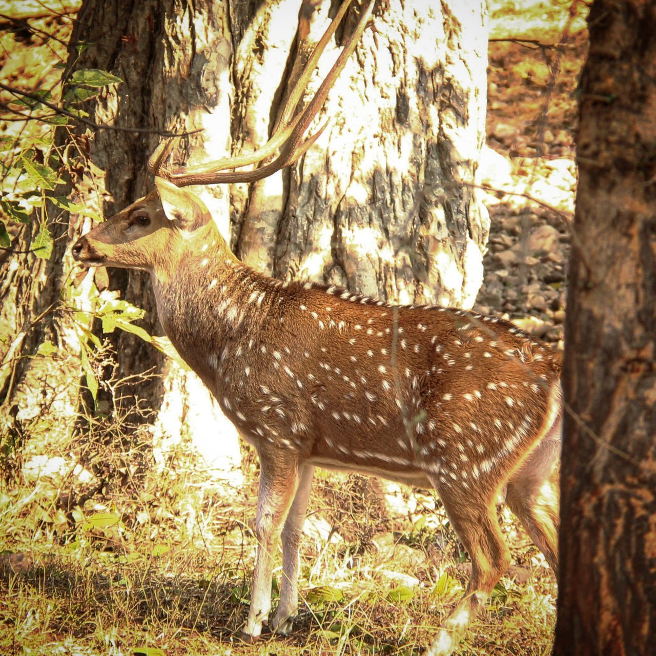 Deersighting Deers Nature Beauty Peace JungleExperience Wildlife Photography Outdoors No People Forest Animals In The Wild