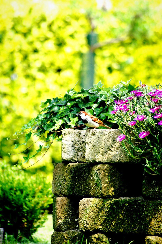 Bird Bird Photography Birds🐦⛅ Passero Passerotto