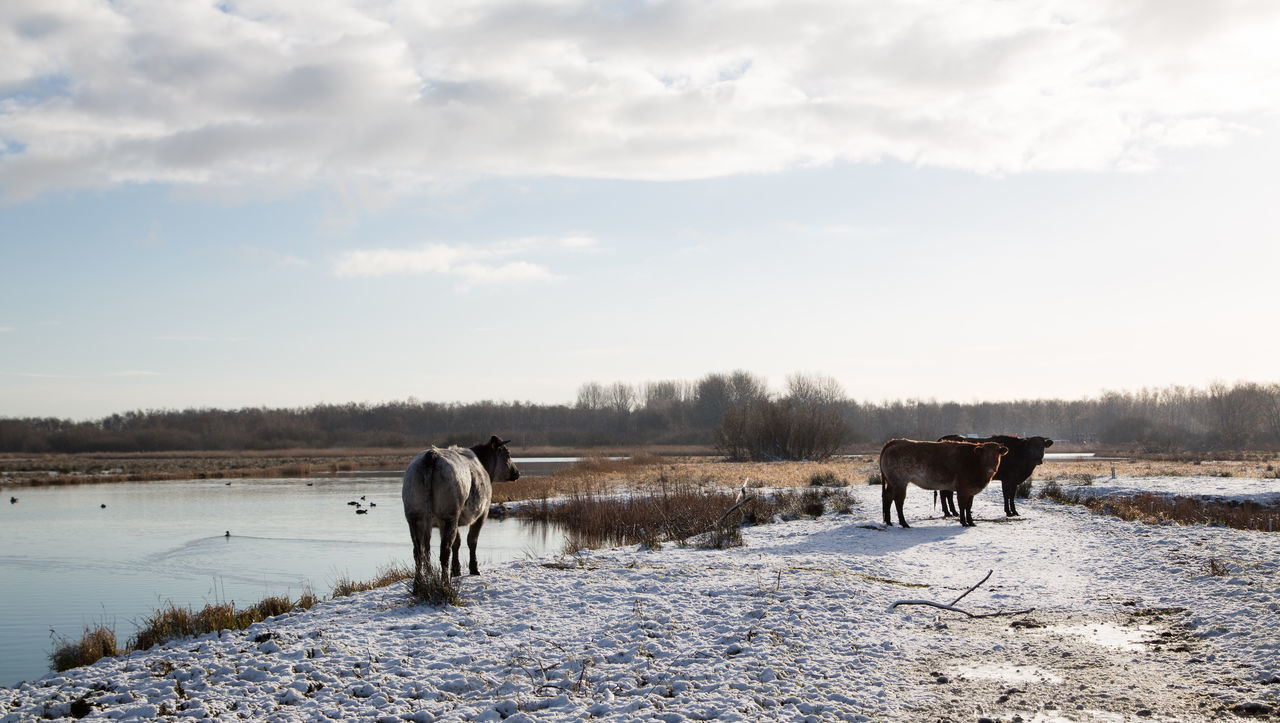 Beautiful stock photos of tiere,  Beauty In Nature,  Cold Temperature,  Day,  Domestic Animals