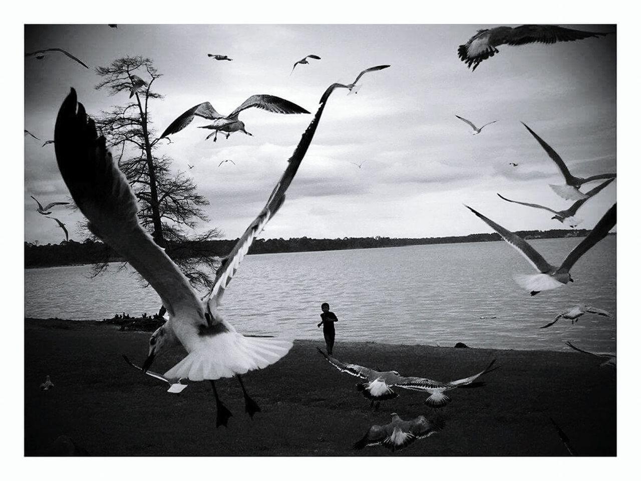Beautiful stock photos of uhren, bird, animals in the wild, animal themes, auto post production filter