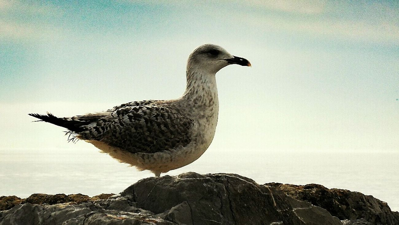 Seagulls Enjoying Life Eye4photography  Bisgen