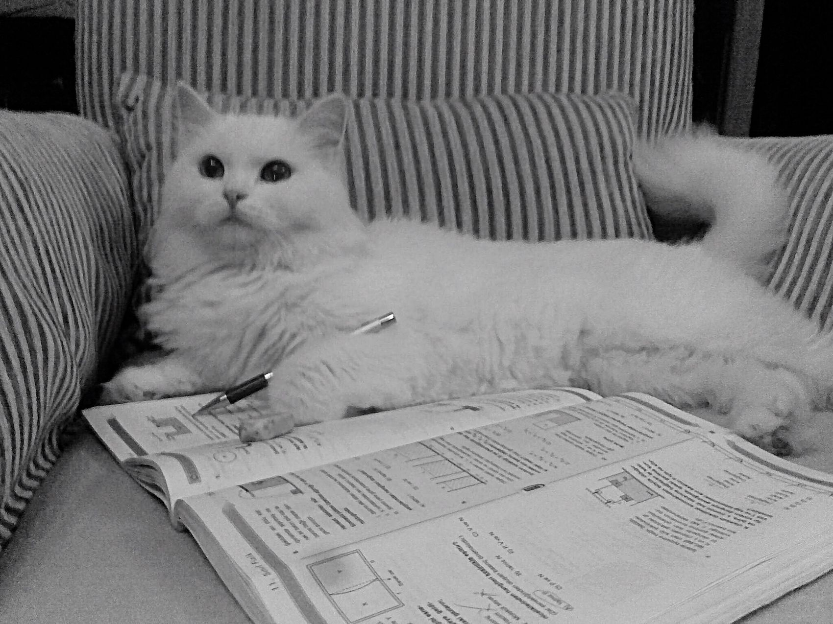 White Cat Studying Intelligent Cat