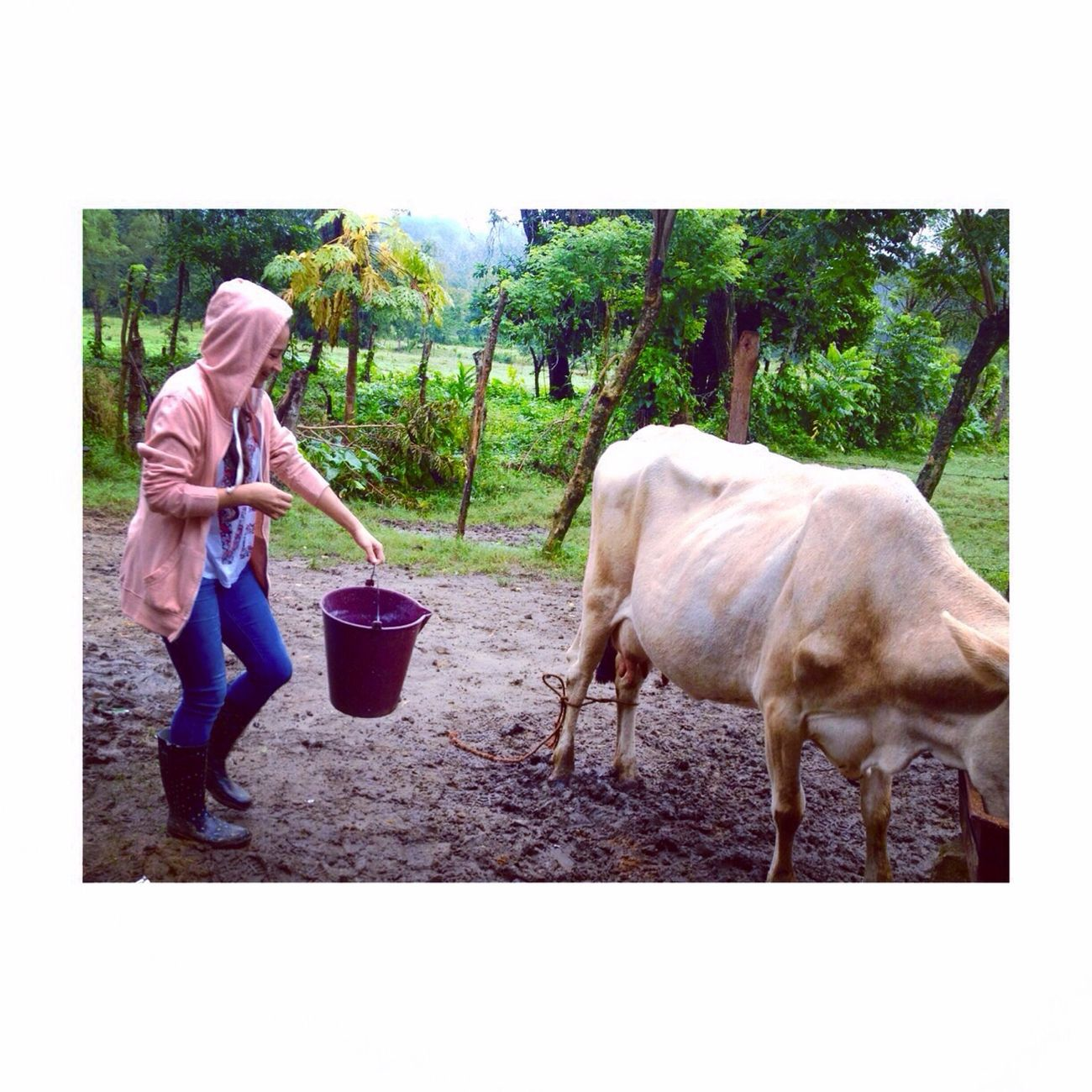 Milking cow, ?? Hello World Today's Hot Look Hobbies Check This Out