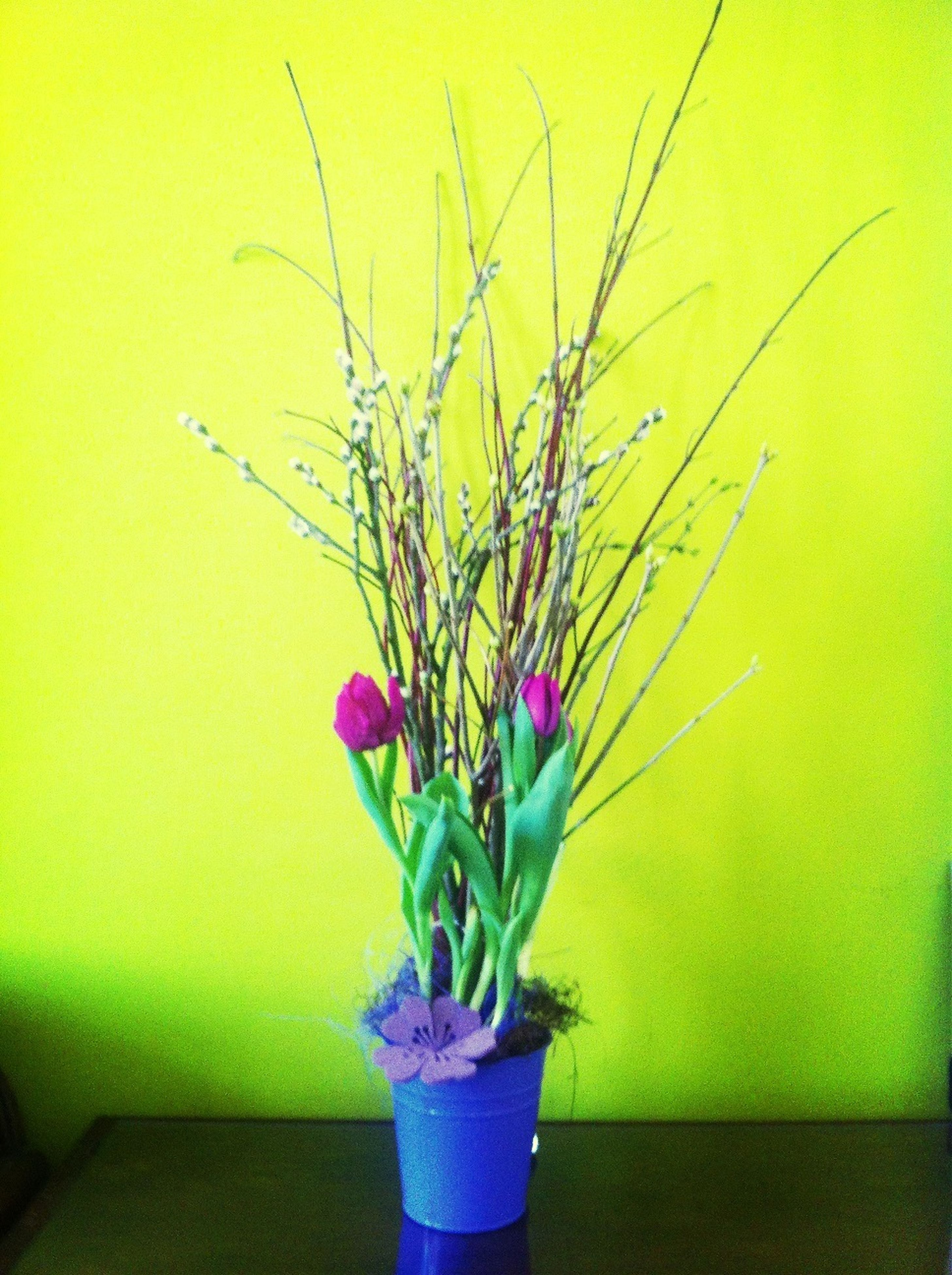 indoors, flower, wall - building feature, vase, plant, stem, potted plant, close-up, fragility, wall, home interior, still life, freshness, decoration, growth, no people, purple, flower pot, hanging, yellow