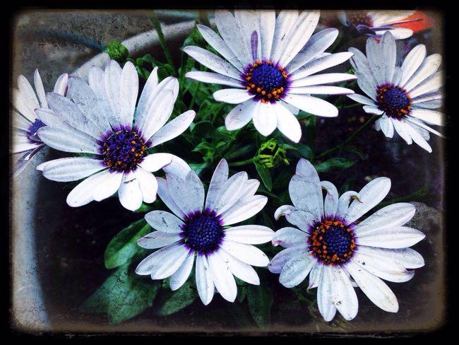 Flowers Garden Flowers,Plants & Garden