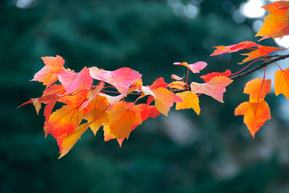 Washington Autumn Beauty In Nature Blossom Botany Branch Change Close-up Day Fall Beauty Flower Focus On Foreground Fragility Freshness Growth In Bloom Leaf Leaves Nature No People Pink Color Scenics Season  Tranquility Tree Vibrant Color