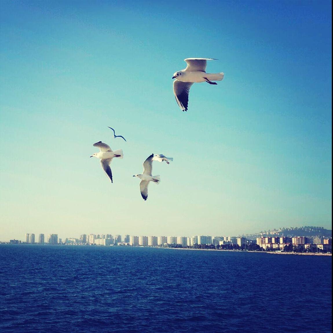 Sea Seagull Sky Blue