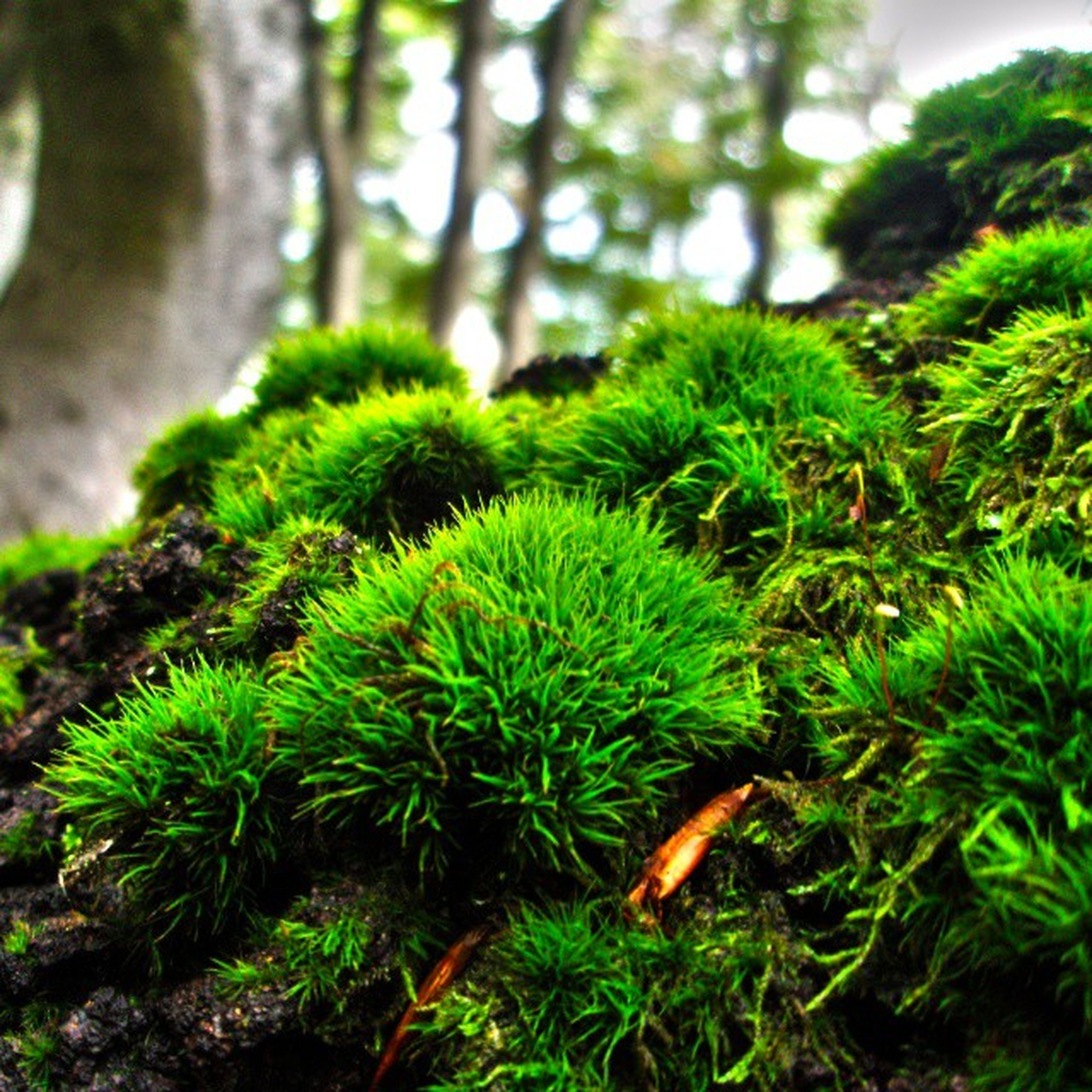 green color, growth, plant, nature, close-up, focus on foreground, leaf, tree, growing, green, beauty in nature, tranquility, branch, tree trunk, forest, day, outdoors, moss, sunlight, no people