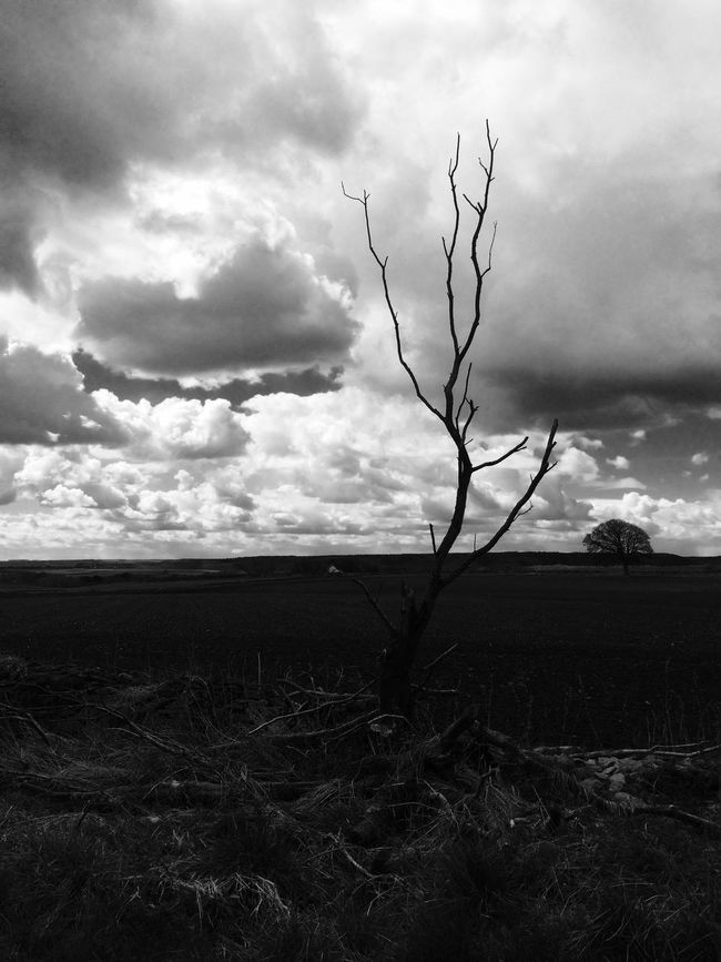 Harewood Dale North Yorkshire Tree Black And White Iphonephotography Desolate Field IPhone 5S