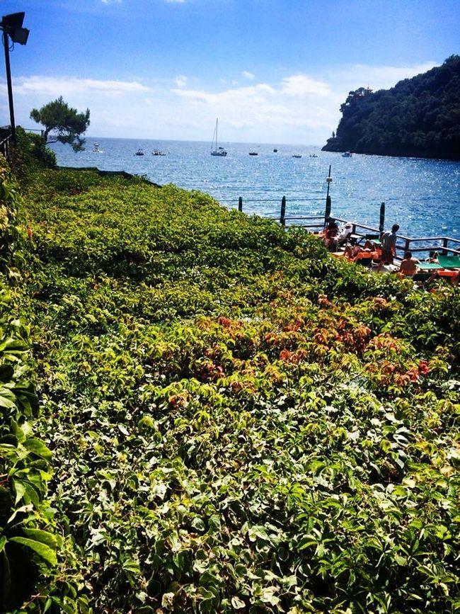 Weekend discovering Liguria Bay of Paraggi Nature Liguria Paraggi Bay Seaside Sea View Beach Expensive No People Outdoors Trendy Beautiful EyeEm Gallery EyeEm Nature Lover Week On Eyeem Green Vertical