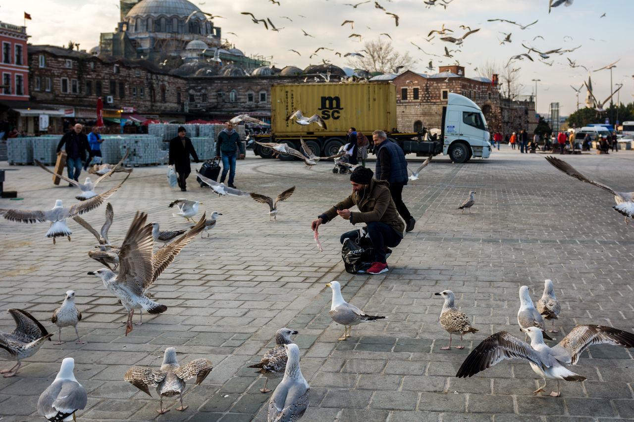 Seagulls in Eminönü Birds Eminönü Eminönü/ İstanbul Eminönüyenicamii Europe Istanbul Ottoman Empire Seagull Turkey Turkish Türkei Türkiye
