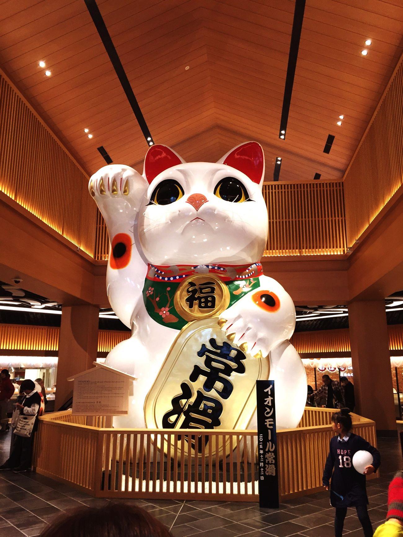 めちゃデカかった‼︎‼︎ Shopping Cat Cats 招き猫 Japan