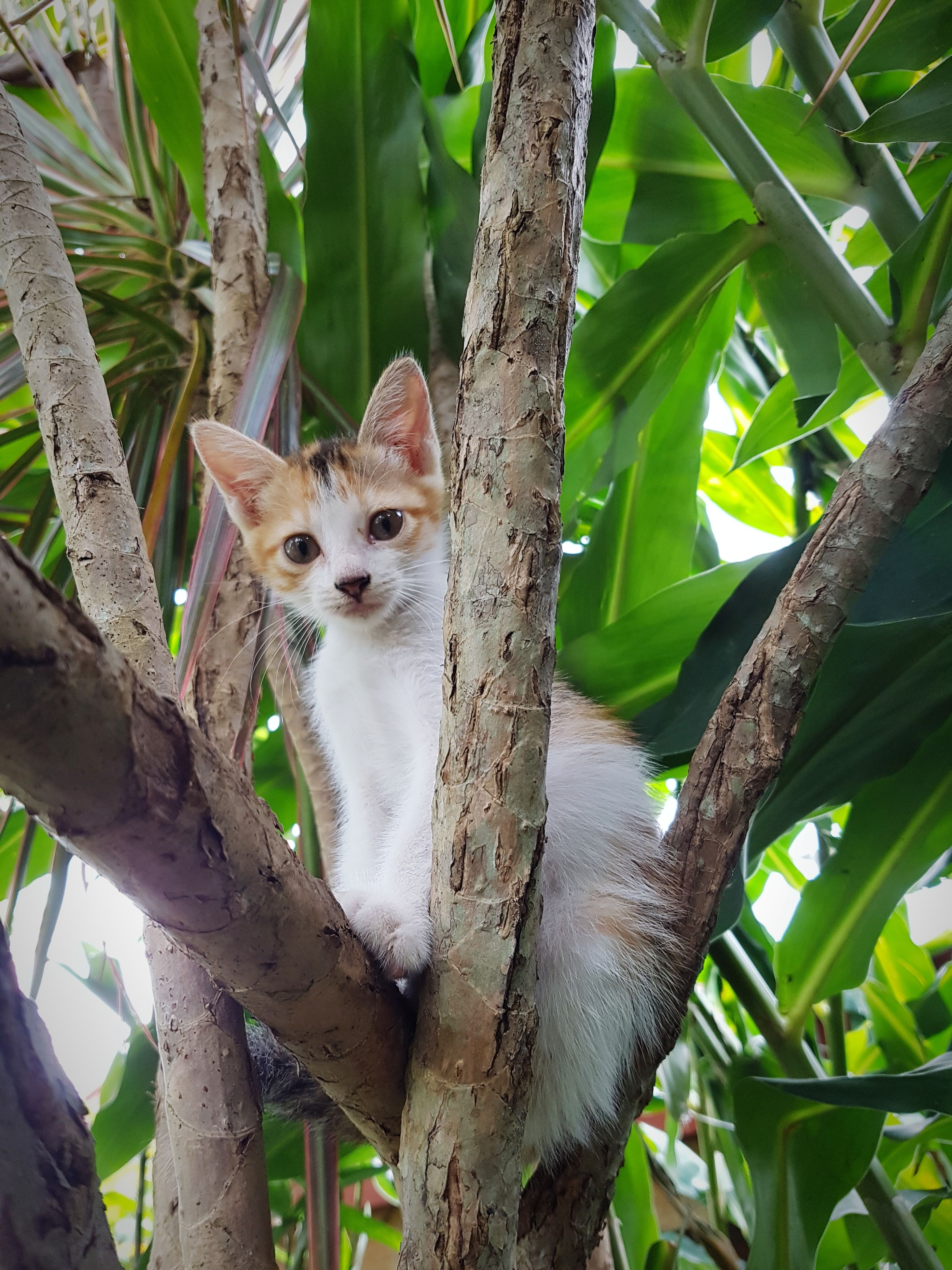 domestic cat, mammal, animal themes, one animal, feline, tree, domestic animals, pets, looking at camera, portrait, day, no people, tree trunk, outdoors, branch, nature, close-up