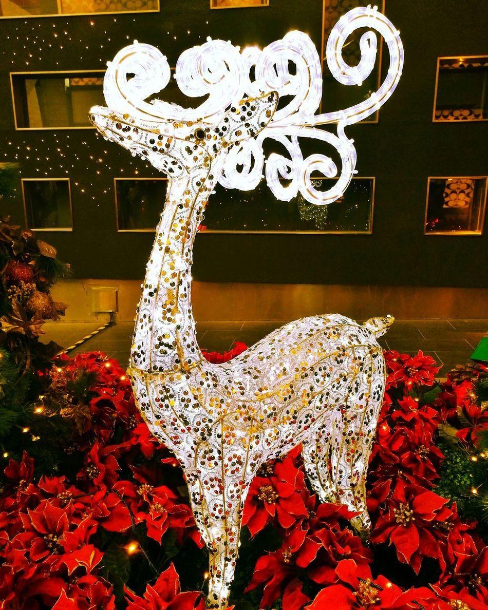 Reindeer Santaclausiscomingtotown Christmas Decorations