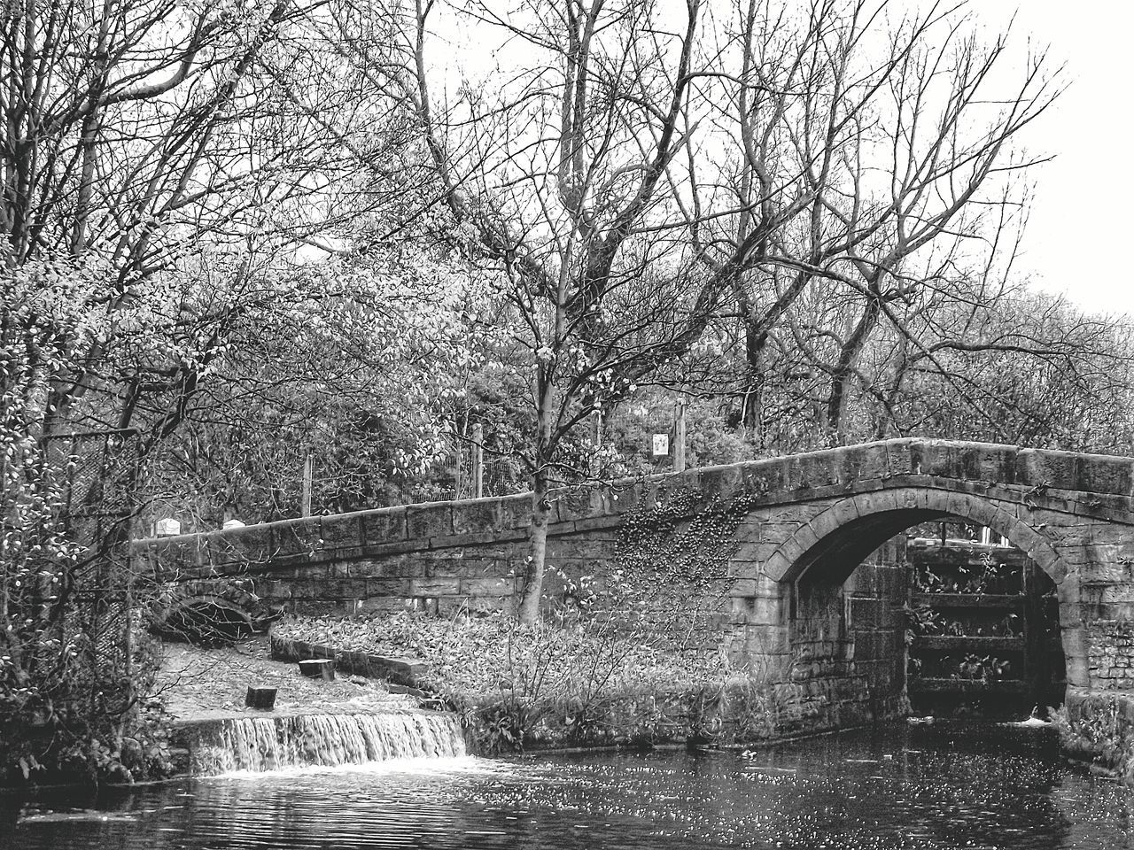 bridge - man made structure, connection, tree, water, river, bare tree, architecture, arch bridge, arch, built structure, waterfront, outdoors, branch, day, bridge, nature, covered bridge, transportation, no people, footbridge, sky