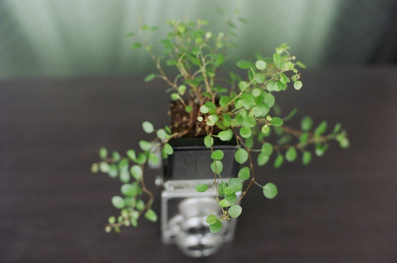 Beautiful stock photos of camera, Camera - Photographic Equipment, Green Color, High Angle View, Indoors
