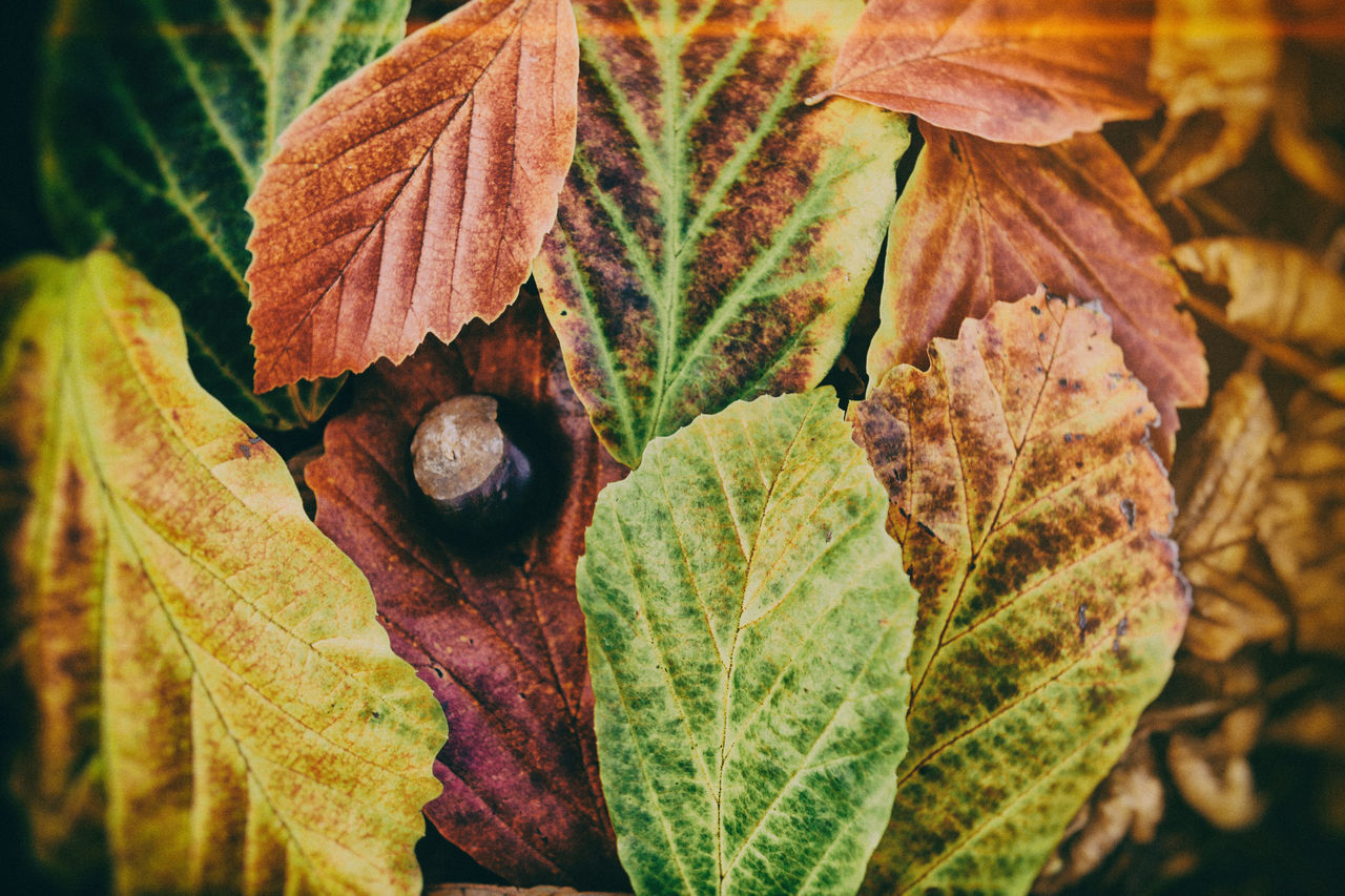Analogous Colors Analogue Photography Autumn Autumn Colors Autumn Leaves Beauty In Nature Brown Color Palette Colorful Colors Garden Green Leafs Photography Lightroom Nik Collection Nostalgia Nostalgic  Nostalgic Landscape Retro Beautifully Organized Retro Styled Solstice Sunset Tivoli VSCO