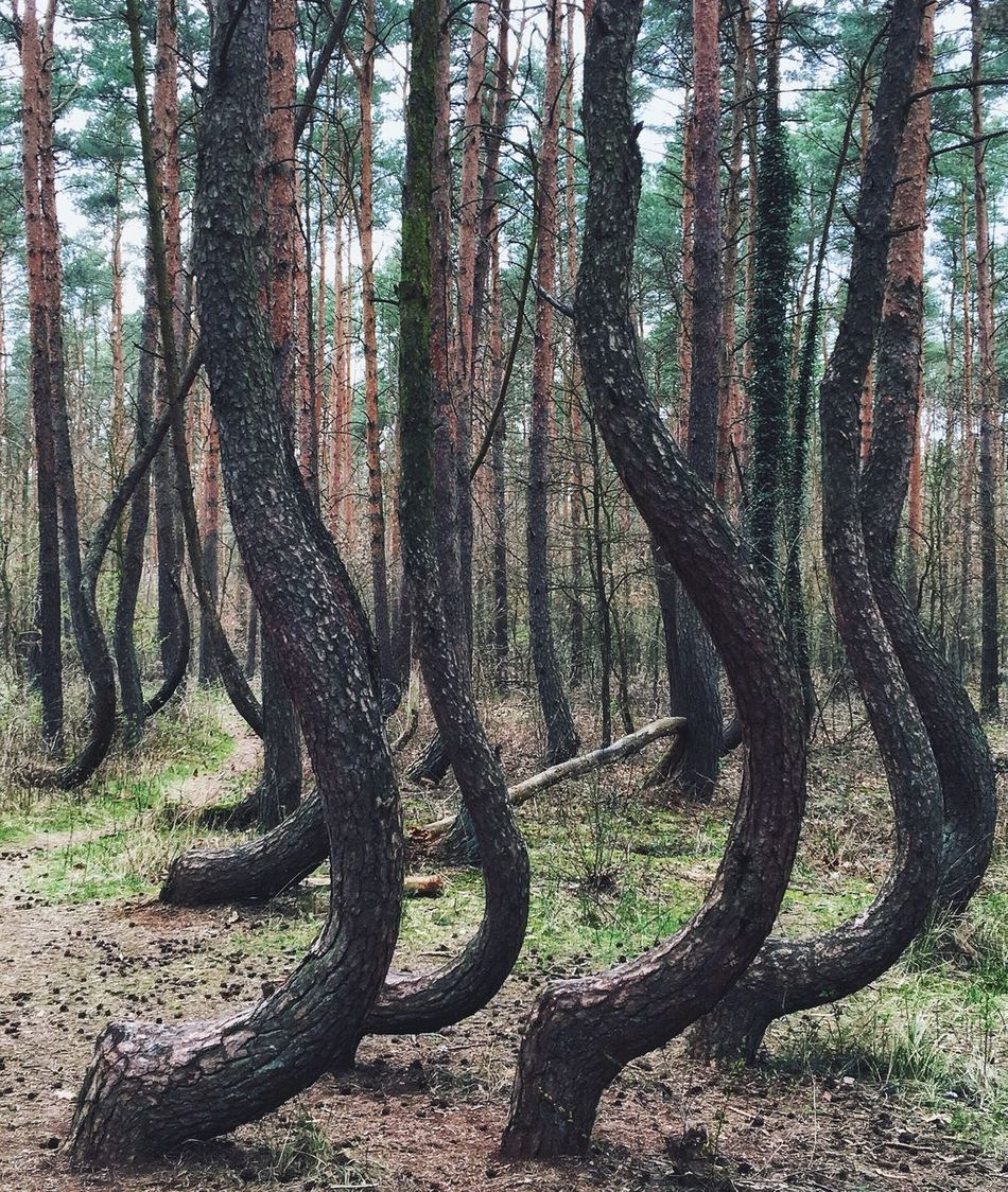Trees Nature Poland