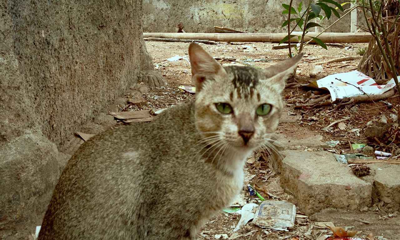 Why you look at me? Cat Pet Animal Kucing Peliharaan