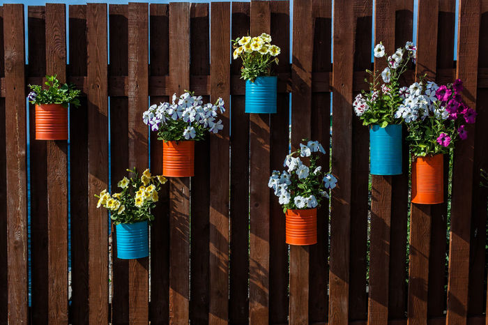 Day Flower Flowerbed Hanging Multi Colored No People Outdoors Pots Of Flowers Variation Wall