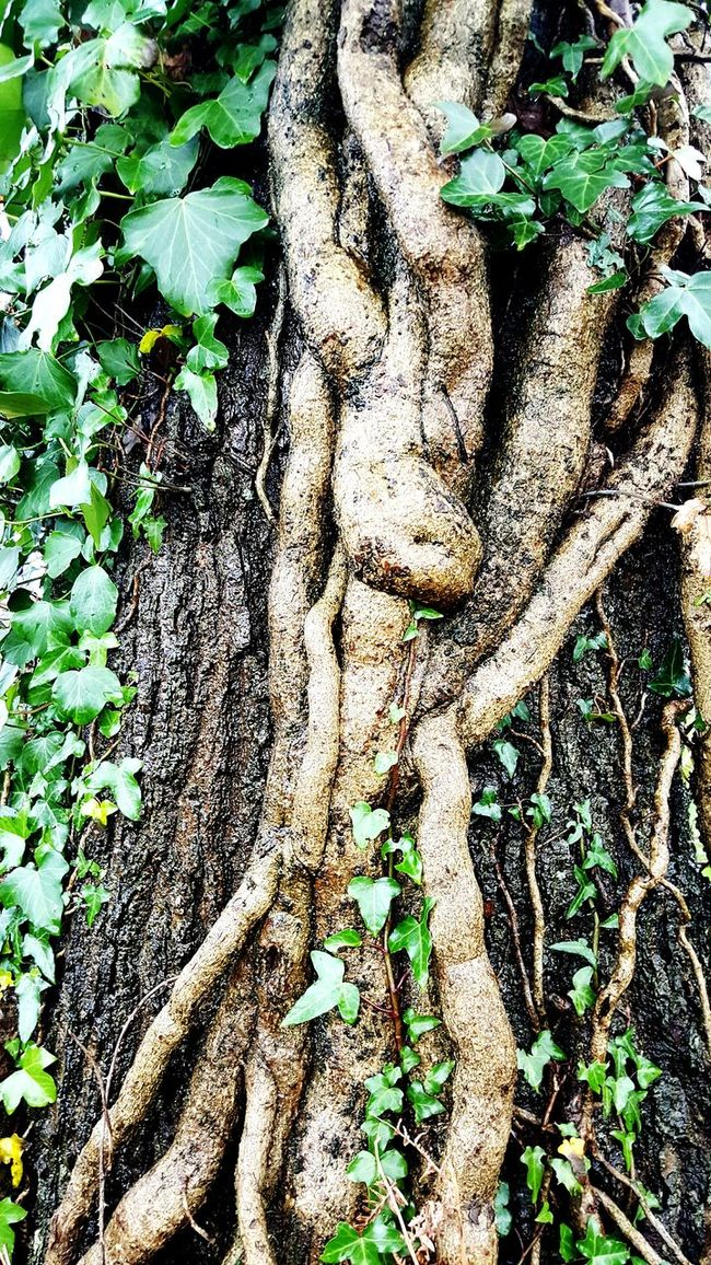 Better Look Twice Bodies TwistedWood Seeing Things ?...You Name It...? Taking Photos Creativity Natural Interesting Check This Out Oddbeauty