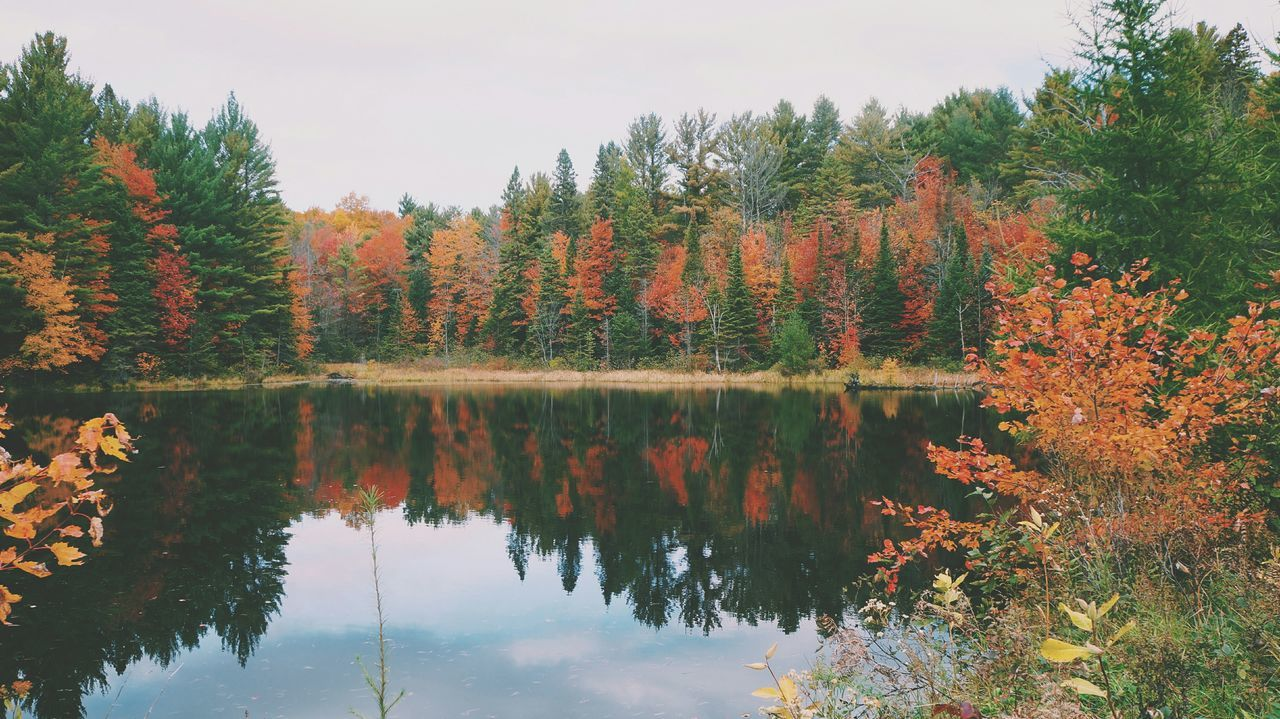 reflect SonyNEX5n Vscocam #vsco Cottage Forest Muskoka Bracebridge