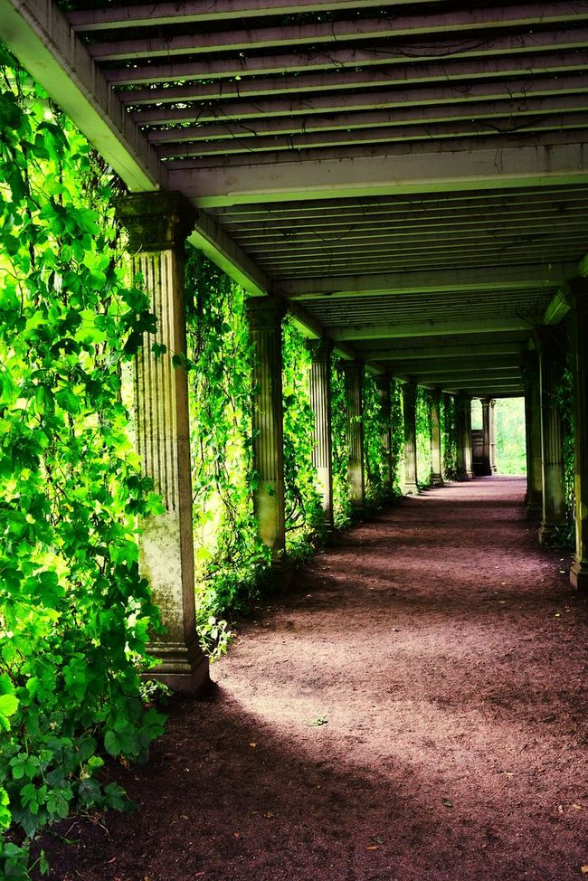 Taking Photos Nature Photography Photography Saint Petersburg Russia Wild Grapes Alley Of Columns Puskin Park