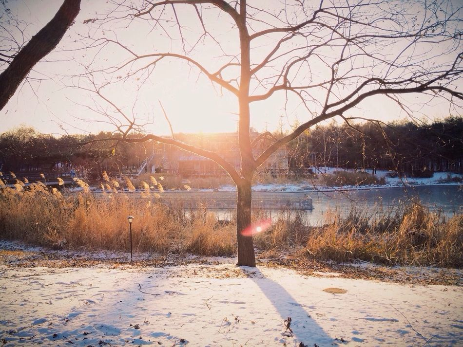 Beautiful stock photos of sun, Bare Tree, Branch, Cold Temperature, Day
