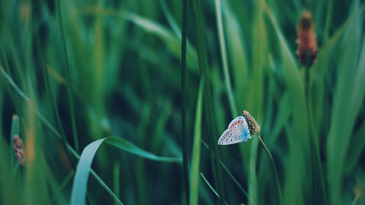 Insect Animals In The Wild One Animal Animal Themes Fujifilm_xseries Green Color Animal Wildlife Damselfly Day Nature Leaf Focus On Foreground Outdoors No People Close-up Grass