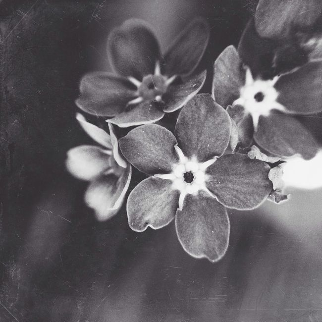 Black And White AMPt_community Mextures Igersgermany