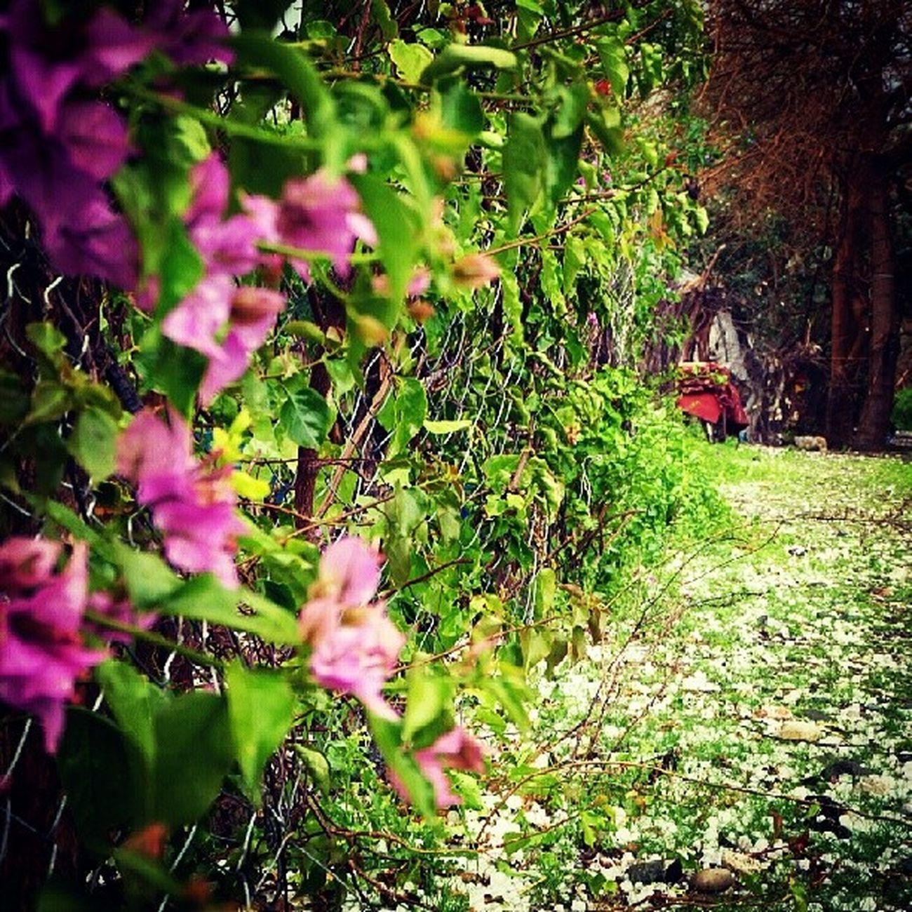 Memleketimin her mevsimi güzeldir=)) Ocak '13