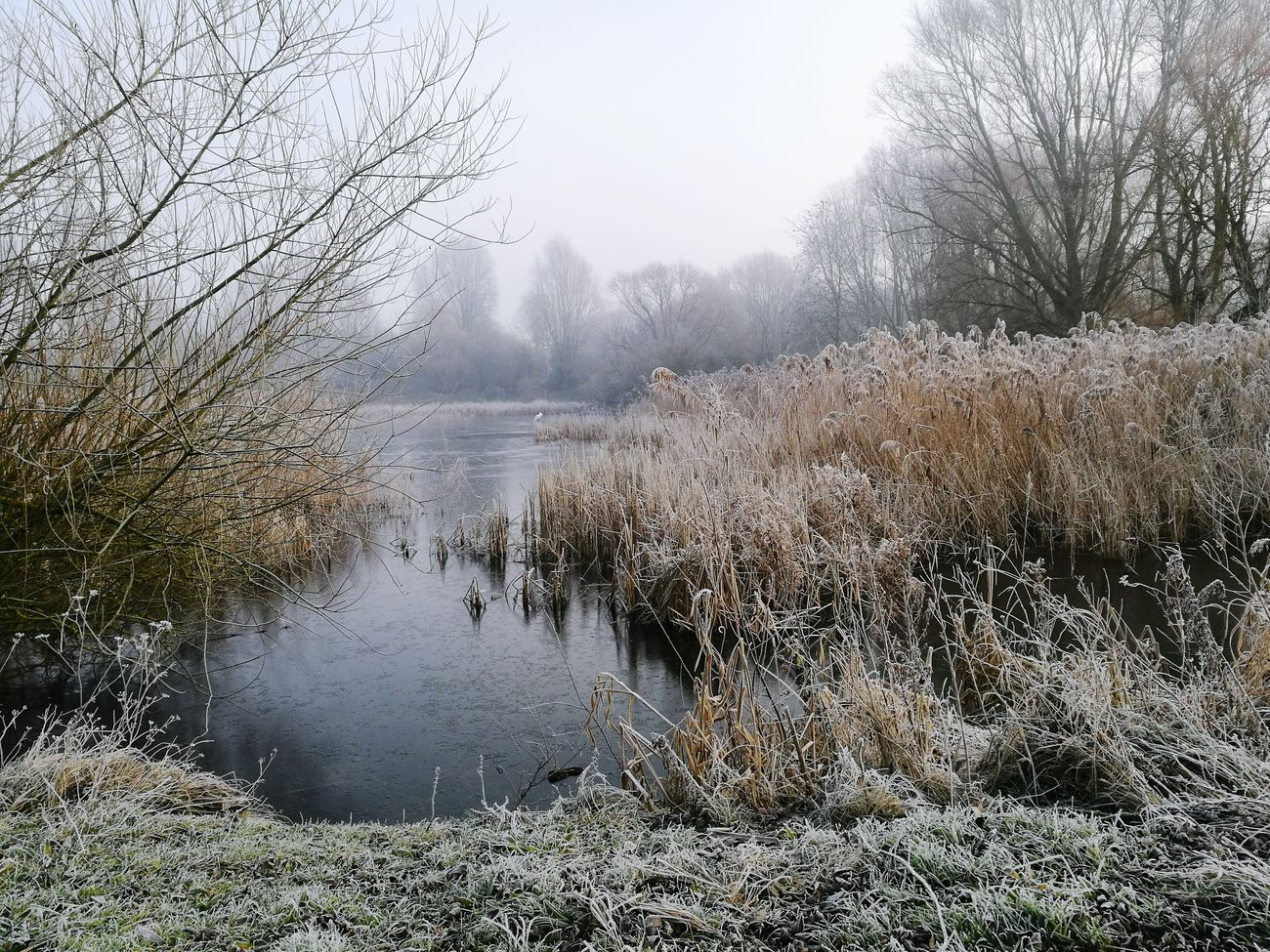Morning frost at Orton Mere Water Nature Outdoors Beauty In Nature