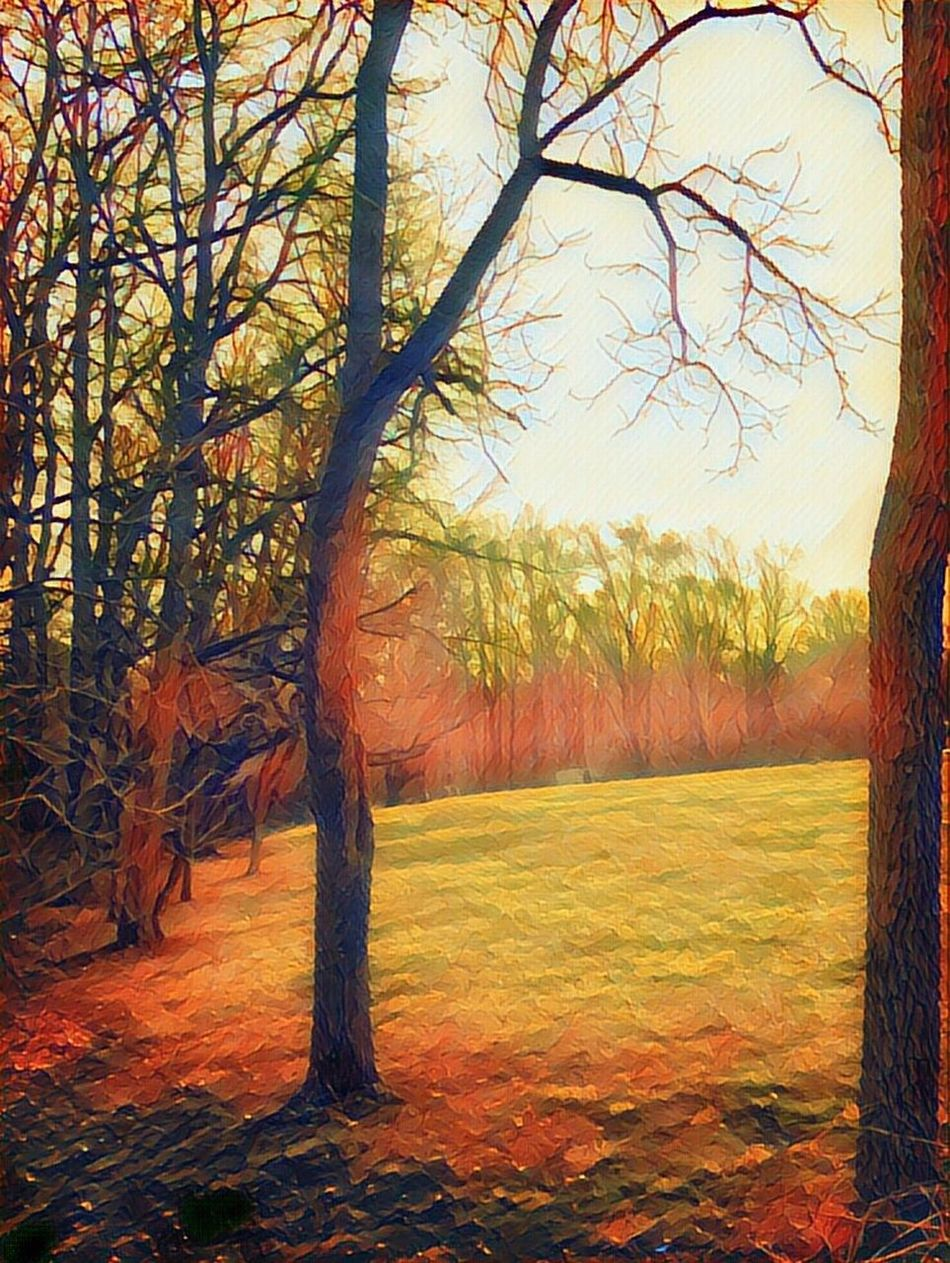 Line of trees in the forest Tree Nature Beauty In Nature Autumn Sunlight Change Tranquility Scenics Outdoors Landscape Tranquil Scene Branch Growth No People Leaf Sky Bare Tree Day Camerafilters IPhoneography