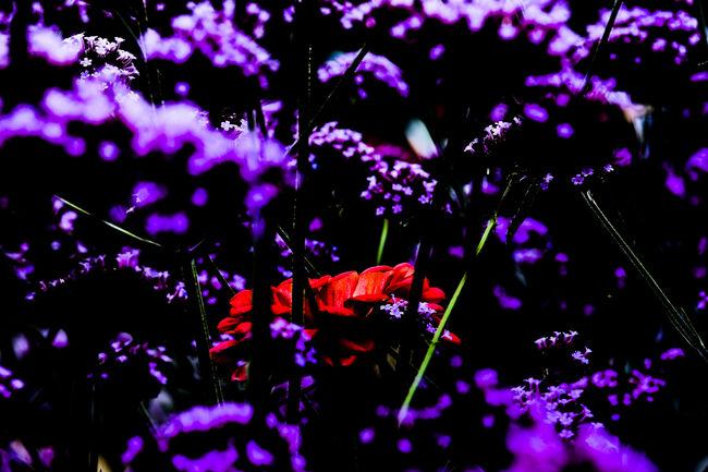 Eyeem different Beauty In Nature Bloom Blossom Botany Branch Close-up Day Flower Flower Head Flowering Plant Fragility Fresh On Eyeem  Freshness FUJIFILM X-T2 Garden Growth In Bloom Landesgartenschau 2016 Eutin Nature Petal Pink Color Plant TakeoverContrast Selective Focus Softness