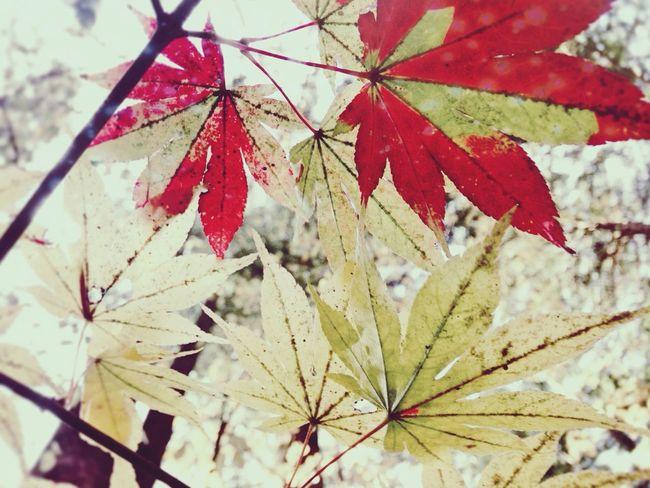 the reason why I love JAPAN. Japan Green Colors Beauty