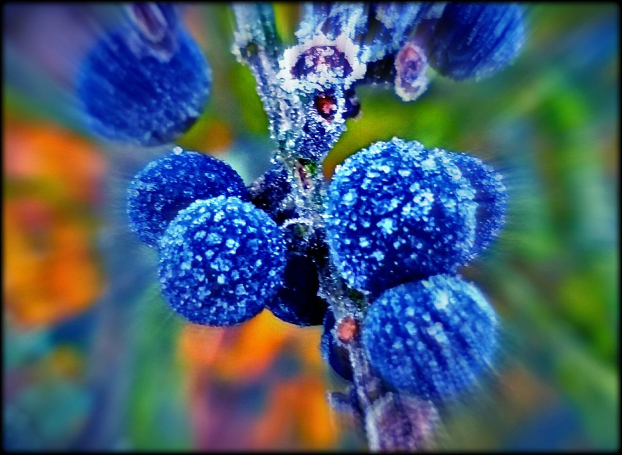 Winter Frost Berrys Beauty In Nature Outdoor Photography No People