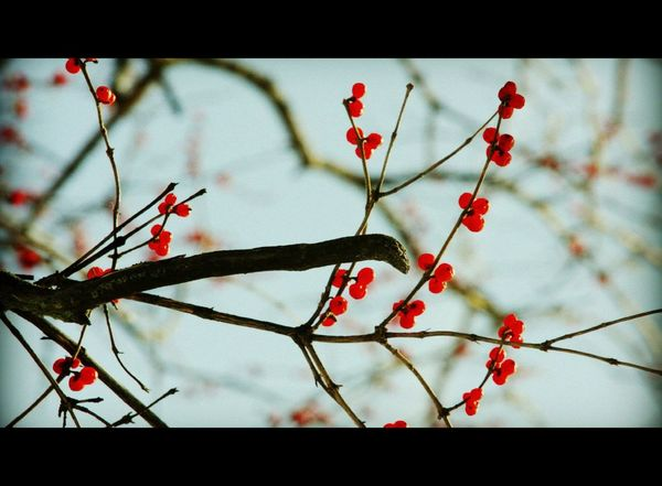 Eye4photography  EyeEm Nature Lover God's Beauty Selective Focus Brilliant Colour Delicate Trees And Sky