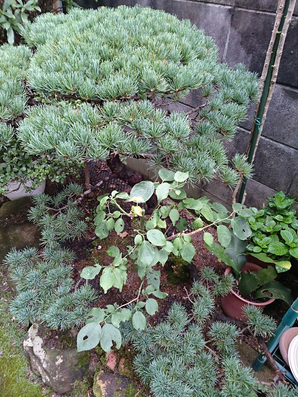 growth, plant, high angle view, nature, green color, outdoors, day, front or back yard, no people, grass, beauty in nature, freshness