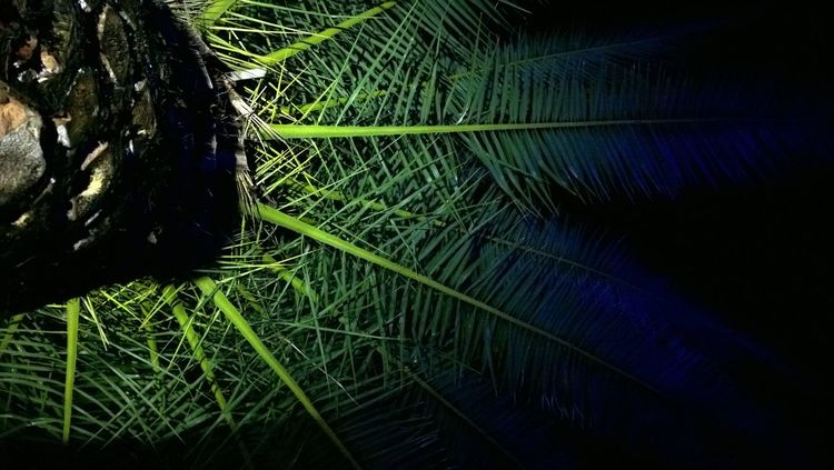 Club Colors Grass Green Color Lights Nature Night Outdoors Palm Tree Tree Up